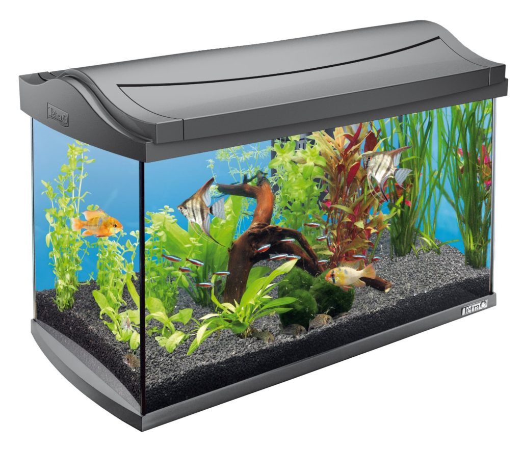 aquarium grundausstattung mein aquarium kaufen. Black Bedroom Furniture Sets. Home Design Ideas